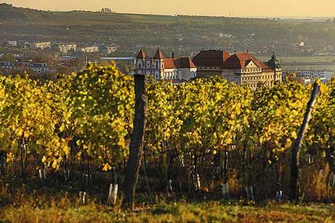 Visit Víno - foto 2