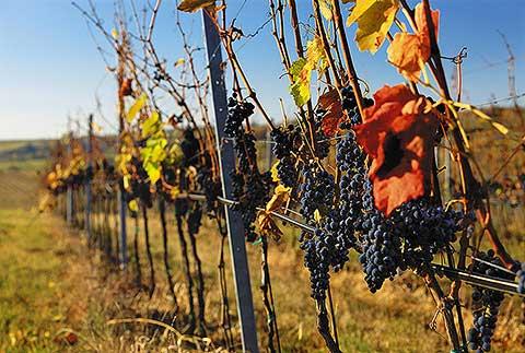 Visit Víno - foto 3