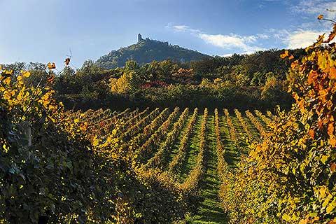 Visit Víno - foto 6